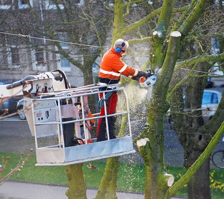 Tree & Brush Removal Services Texas
